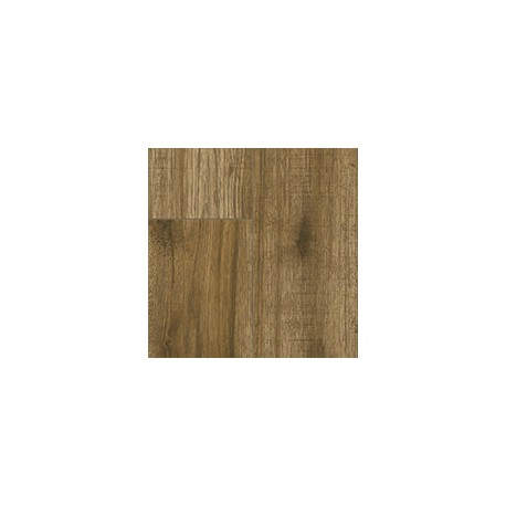 Valley hickory - 34029